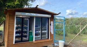 Gdynia: Plantator malin otworzył samoobsługowy sklep z owocami