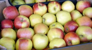 Spirala coraz niższych cen jabłek deserowych. Który sadownik to wytrzyma?