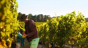Europol: Wyzysk pracowników sezonowych w winnicach na terenie UE