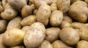 PIORiN: Zdrowotność polskich ziemniaków uległa poprawie