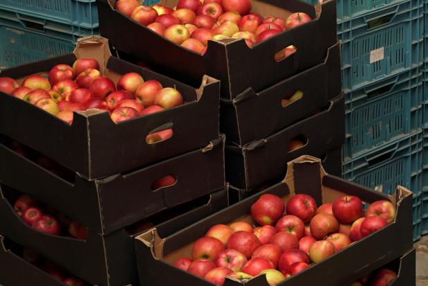 Rynek jabłek: Wchodzimy w sezon niskimi cenami i takie pewnie pozostaną