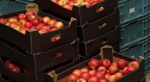 Rynek jabłek: Niskie ceny będą się utrzymywać przez większość sezonu?