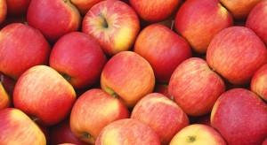 Nie ma eksportu polskich jabłek do Chin ?