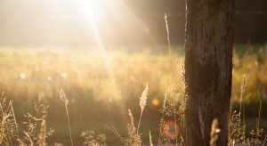 IMGW: niedziela 10.10 słoneczna; w nocy na wschodzie mróz