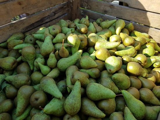 Handel gruszkami: Jaki popyt i ceny?