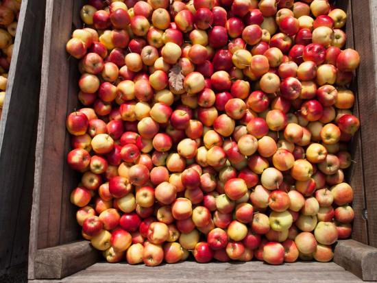 Sposób na choroby przechowalnicze jabłek