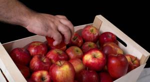 Eksporter: Coraz trudniej jest sprzedać jabłka
