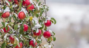 Rumunia: Atak zimy dotknął sadowników