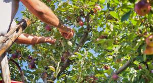 Rosnące koszty podważają sens uprawy owoców i warzyw