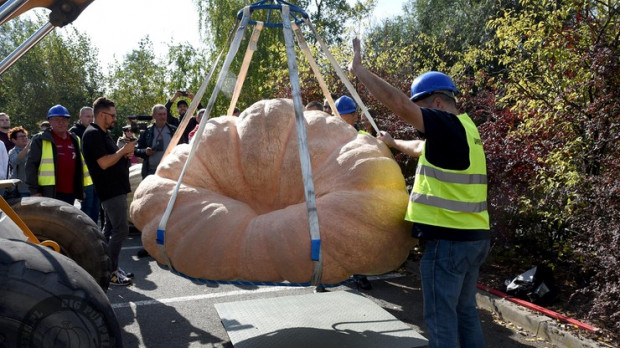 Największa dynia w Polsce waży 848,5 kg