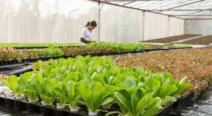 Belgia: Rosnące ceny prądu uderzają w uprawy szklarniowe