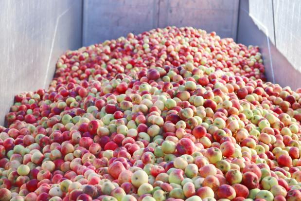 Zawyżone notowania cen jabłek przemysłowych