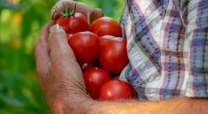 Rosja: Ministerstwo rolnictwa wesprze producentów warzyw