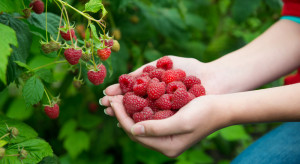 Malinomat – śmiały pomysł na sprzedaż owoców prosto z plantacji (wywiad)