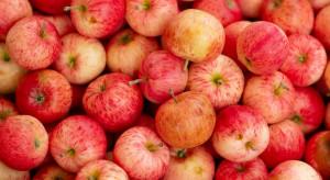 Ceny jabłek na Ukrainie o 35 proc. niższe niż rok temu