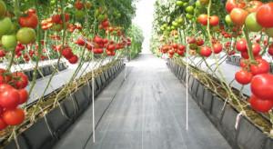 Holandia: Wysokie ceny gazu niszczą ogrodnictwo szklarniowe