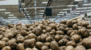 Które produkty rolne podrożały we wrześniu?