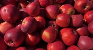 Ceny jabłek w kolejnych miesiącach będą wyższe?
