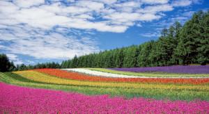 Śląskie: W Metropolii powstaną łąki kwietne o powierzchni 32 tys. m kw.