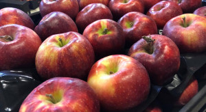 W 2021 roku wzrósł eksport polskich jabłek do Białorusi i Egiptu
