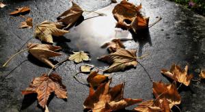 Synoptyk IMGW: piątek nadal wietrzny i z deszczami