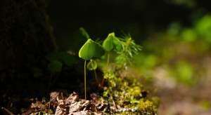 Inwestycje w lasach - w listopadzie będzie można ubiegać się o wsparcie