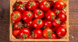 Pomidor to owoc czy warzywo. Oto jest pytanie!