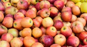 Jabłka na przemysł po 22 gr/kg? Kolejne spadki cen w skupach na Mazowszu