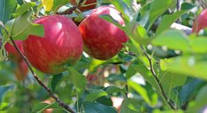 Spożycie jabłek w UE powinno utrzymać się na wysokim poziomie