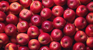 Jakość - a nie cena przemysłu - powinna być wyznacznikiem ceny jabłek!