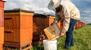 Wielkopolskie: Złodziejowi pszczół grozi 5 lat więzienia