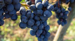 KOWR: Deklaracje dotyczące rynku wina do 30 października