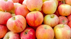 Rosną ceny i eksport mołdawskich jabłek