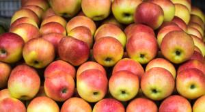 To będzie trudny sezon dla producentów jabłek z Serbii
